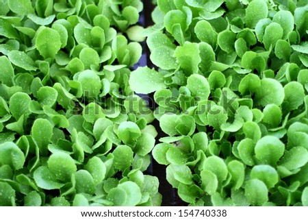 Vegetables grown in vegetable plots #154740338