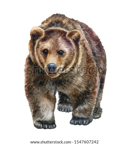 Brown bear walking in front isolated on white background. Hand drawing. Template. Hand painting. Realistic wild animal. Watercolor. Clip art.