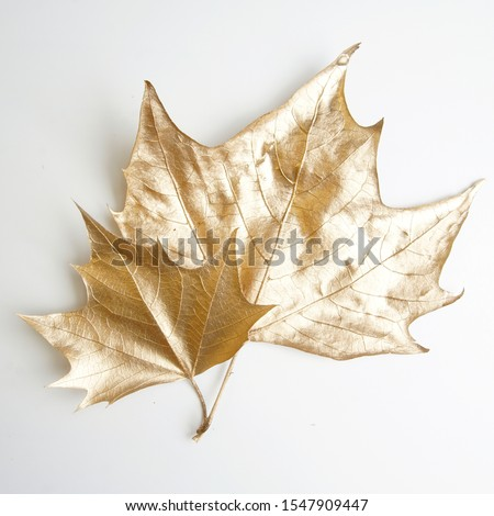 golden leaf design elements. Decoration elements for invitation, wedding cards, valentines day, greeting cards. Christmas decor Isolated on white background.                                 #1547909447