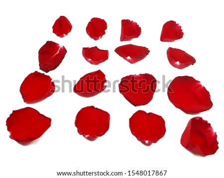 Set of 16 red rose petals isolated on white background #1548017867