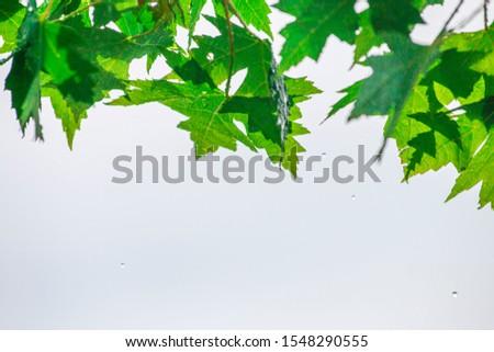 Tree Leaves (Dry Leaves, Green Leaves, Spilled Leaves) #1548290555