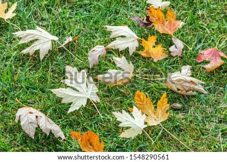 Tree Leaves (Dry Leaves, Green Leaves, Spilled Leaves) #1548290561