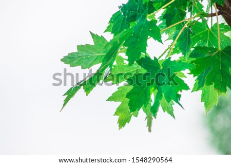 Tree Leaves (Dry Leaves, Green Leaves, Spilled Leaves) #1548290564