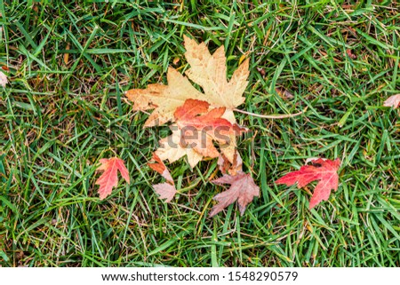 Tree Leaves (Dry Leaves, Green Leaves, Spilled Leaves) #1548290579