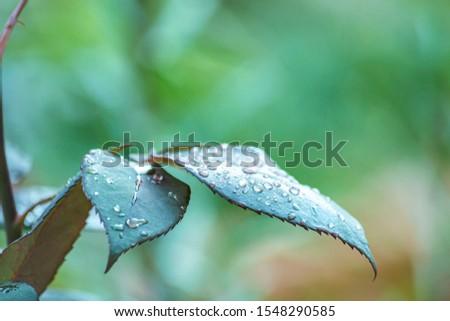 Tree Leaves (Dry Leaves, Green Leaves, Spilled Leaves) #1548290585