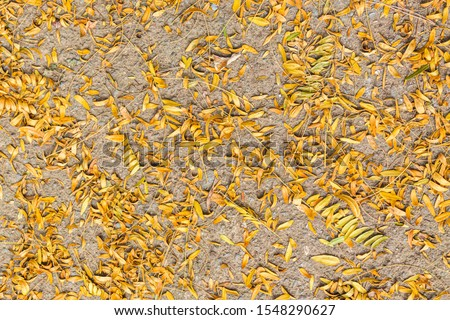 Tree Leaves (Dry Leaves, Green Leaves, Spilled Leaves) #1548290627