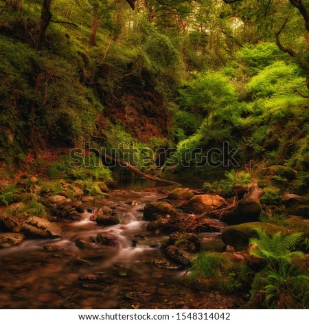 Mountain creek in deep forest, Wicklow mountains, Ireland