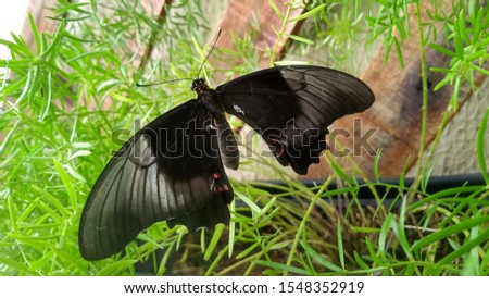 A Beautiful Black butterfly nature #1548352919
