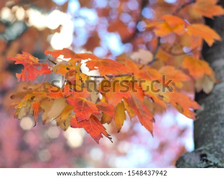 Red and orange leaves against a bright sky #1548437942