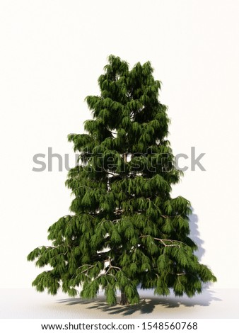 Trees isolated on white background, tropical trees isolated used for design, advertising and architecture. 3d rendering #1548560768