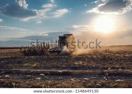 Picture of harvester in corn field harvesting in autumn. Husbandry concept. #1548649130