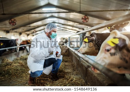 Caucasian veterinarian in protective uniform crouching, holding bottle with cure and preparing to give a shot to ill calf. Stable interior. #1548649136