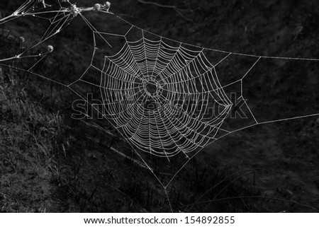 wet spiderweb on a black background Royalty-Free Stock Photo #154892855