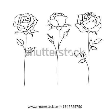 Set of sketches, hand drawn rose, line art. Vector illustration