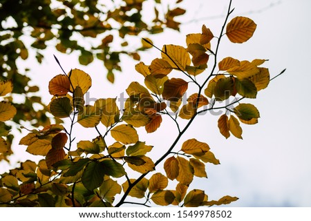 Closeup of tree leaves in autumn from France in late afternoon #1549978502