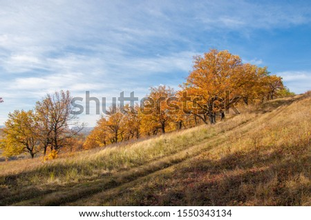 Autumn photo, lonely oak against the background of a beautiful sky. a tree that bears acorns fruit, and typically has lobed deciduous leaves. #1550343134