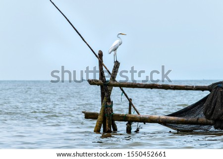 Great Egret or Great White Egret at the Indonesian sea. Many Egrets are members of the  Genera Egretta or Ardea  #1550452661