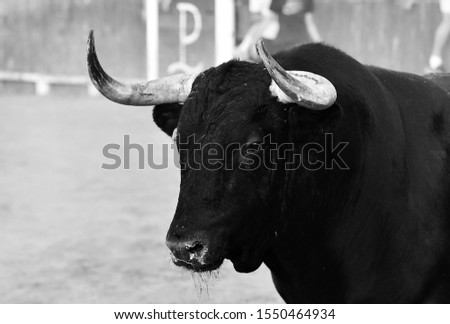 Big bull with big horns on spain #1550464934