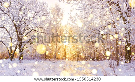 beautiful snowy winter landscape panorama with forest and sun. winter sunset in forest panoramic view. sun shines through snow covered trees  Royalty-Free Stock Photo #1550514230