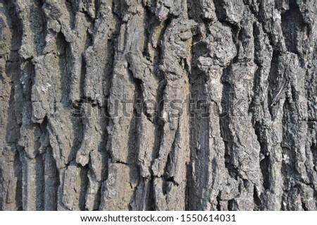 Drawing texture of oak bark. Harvesting textures for designers. Natural materials #1550614031