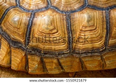 Close up Sulcata tortoise skin for animal skin #1550921879