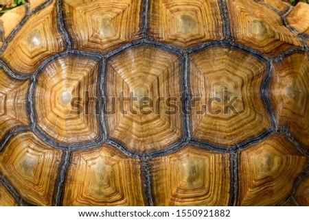 Close up Sulcata tortoise skin for animal skin #1550921882