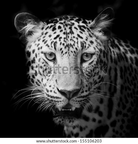 Leopard portrait #155106203