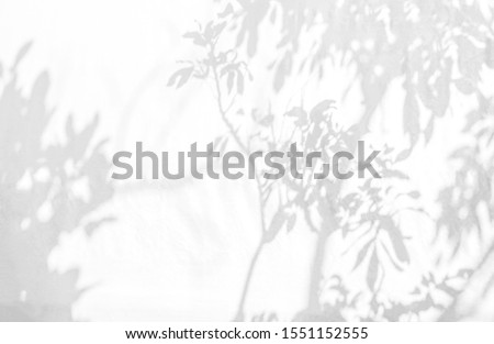 Abstract tree shadow on wall background. Natural leaves tree branch shadows and sunlight dappled on white concrete wall texture in garden for background wallpaper and any design #1551152555
