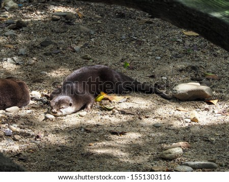 A picture of an otter sleeping on the ground