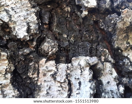 Terrifying and scary bark patterns #1551513980