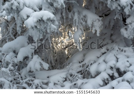 Russia, Ural mountains, National park Taganay, 03 of november 2019, Winter snowy tree branches and lightspot between them #1551545633