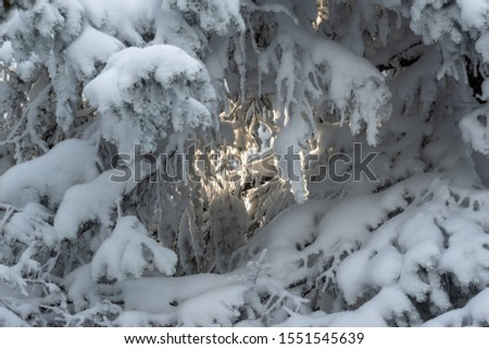 Russia, Ural mountains, National park Taganay, 03 of november 2019, Winter snowy tree branches and lightspot between them #1551545639