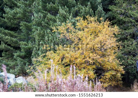 View over yellow leaves tree in the autumn forest. #1551626213