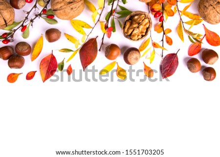 Barberry branches, nuts and autumn leaves. Autumn concept. #1551703205