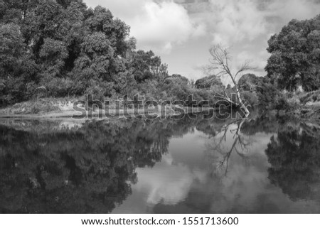 Black and white picture of beautiful peaceful landscape of green trees and water of river or lake with reflections of plant and sky on surface of calm water. Horizontal monochrome photography.