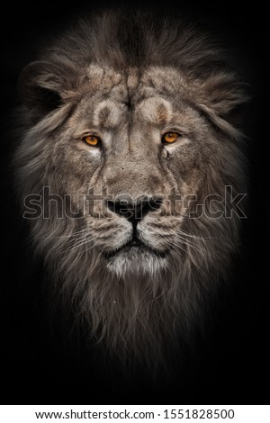 A bleached photo of a portrait of a maned (mane, hair) powerful male lion in night darkness with bright glowing orange eyes, isolated on a black background #1551828500