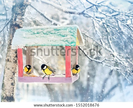 birds on feeder on winter day. birds Tits (parus major) eating seed from bird feeder, winter season. human care of birds, problem of survival of birds, environment #1552018676