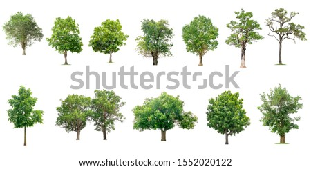 Isolated trees on white background , The collection of trees. #1552020122