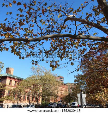 Fall trees and buildings in Providence #1552030415