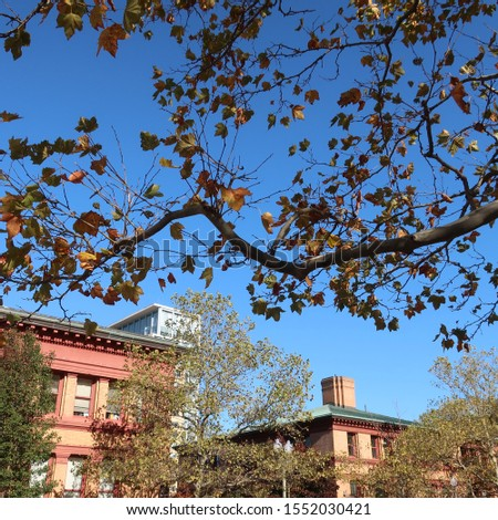 Fall trees and buildings in Providence #1552030421