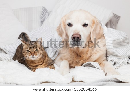 breed tabby cat under cozy  plaid. Animals warms under gray and white blanket in cold winter weather. Friendship of pets. Pets care concept. #1552054565