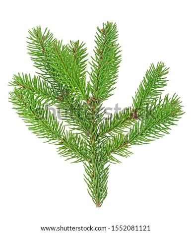 Branch of fir tree isolated on white background, top view. #1552081121