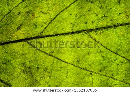 Background image of a leaf of a tree close up #1552137035