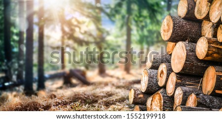 Forest pine and spruce trees. Log trunks pile,  the logging timber wood industry. Wide banner or panorama wooden trunks. #1552199918