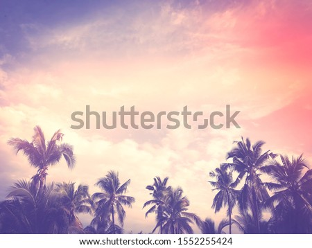 Palm tree and blue cloudy sky with copy space pink  pastel tone