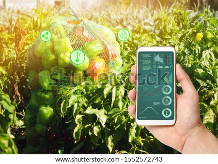 Farmer hold a smartphone on a background of a field with a pepper. Agricultural startup. Automation and crop quality improvement. High technology, innovation. Scientific research. #1552572743