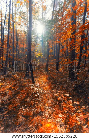 sun rays in autumn forest.nature in autumn time  #1552585220