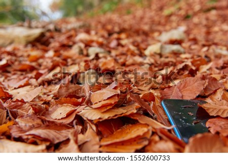 Mobile lost in the middle of the autumn leaves to the depths of the forest, blue mobile, covered with brown leaves, is trodden by someone since it is dirty #1552600733
