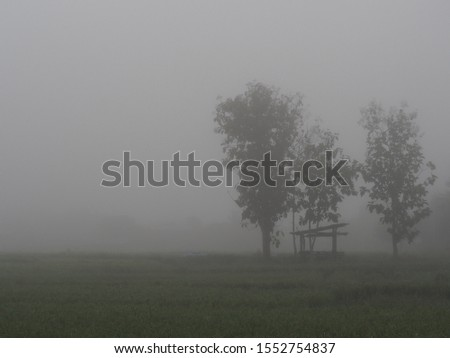Foggy Rice farm fields, lonely tree. Land and abandon house. Beautiful farm landscape in fog #1552754837