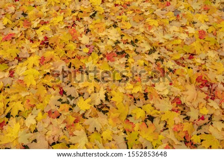 fall leaves are on the ground #1552853648